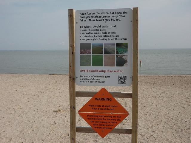 Algae Blooms – Important Information