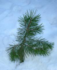2019 Tree Planting Program
